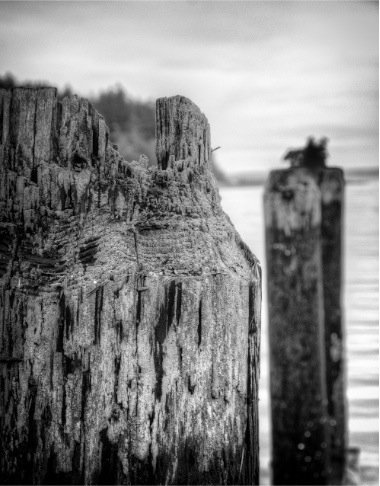 Nik Software Silver Efex Pro - Photo Software Review - Holga Style