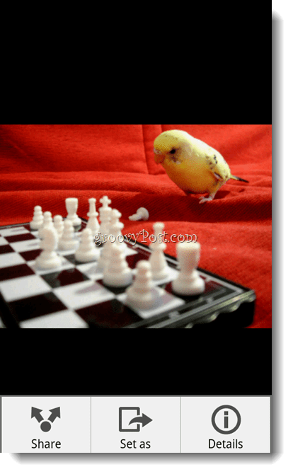 Android Dropbox Photo Viewer Bird