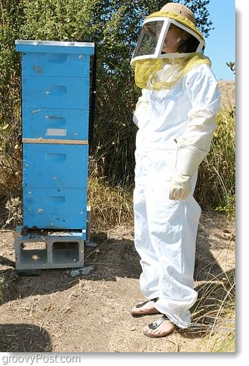 Google Bee 5 story hive