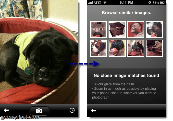GOOGLE GOGGLES does ok with animals