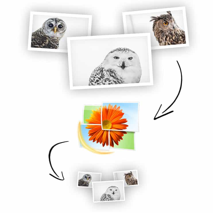 batch resize windows live photo gallery tutorial article how to images photos