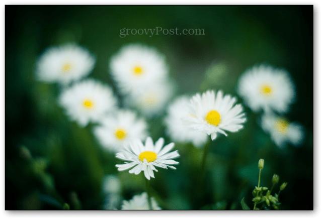 example photo bokeh 50mm 50 mm lens focus background blur nikkor 50 mm 50mm f/1.4 1.4 aperture