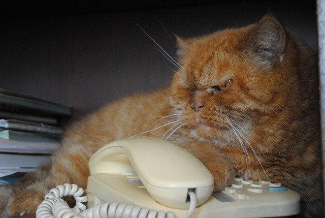 Waiting a call