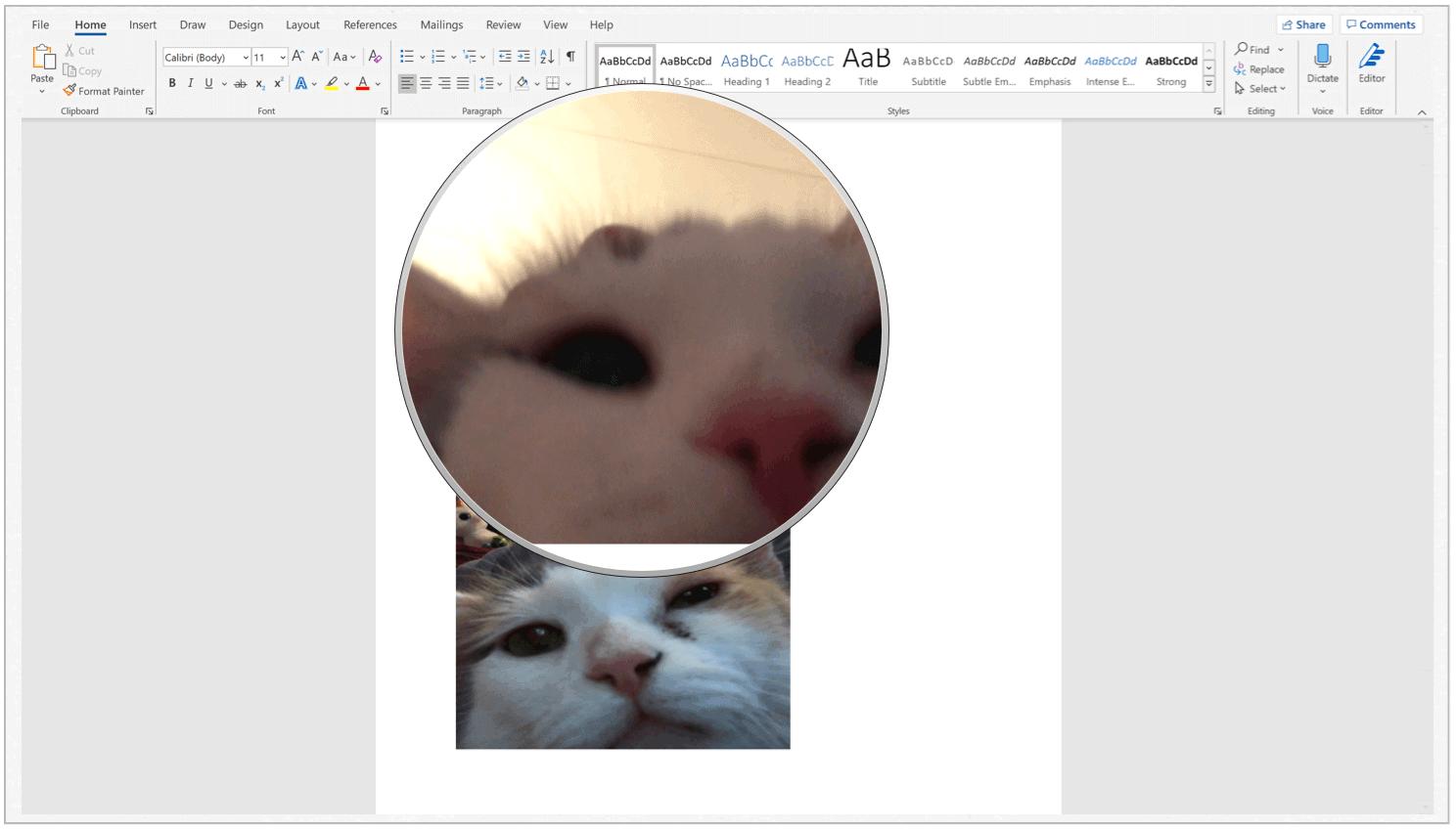 Microsoft Word select image